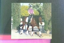 Biomechanics for the Equestrian