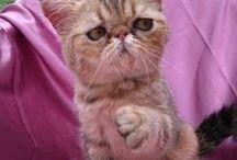 Gatos & Cia / Gatos e Cia....animais são tudo de bom!