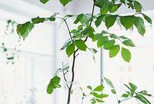 Planten - Anders Style