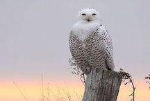 Uil - Eule - Owl - Anders Style