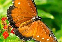 Vlinder - Schmetterling - Butterfly - Anders Style
