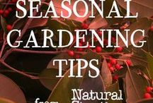 Seasonal Gardening Tips / Off season tips for getting your garden ready for next year