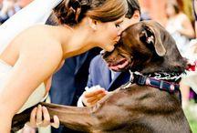 Wedding - dog