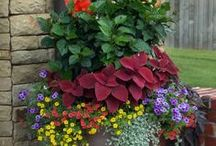 Celebrate: Gardening / We love to pin Gardening Ideas, Gardening Tips, Things that you can DIY in Gardens, Info about Gardening for Beginners, and Beautiful Gardens.
