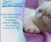 Motivação & Gatos / Frases motivacionais acompanhadas de fotos dos gatos do Gatil LuxVitae, para iluminar o seu dia.