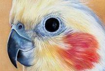 TEKENEN - VOGELS - Drawing birds 02 / Birds, all kinds of birds