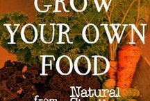 Grow Your Own Food / Tips for growing your best vegetable and herb garden