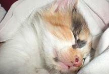 Kisa / My cute cat, her name is Kisa as known as Kiki! :3 She love to climb anywhere or anyone and kisses <3