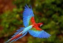 Nature - Birds