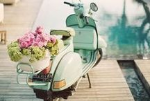 A Breezy Romance / ~Lifestyle, traveling - flowers & such. / by Lu Anne