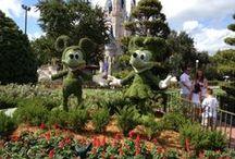 Walt Disney World / by World of Magic Travel