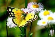 Butterflies and friends
