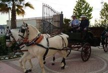 Carruaje de caballos / Horse carriage