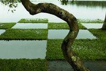 landscape / by olga goncharova