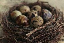 Easter Floristic, Easter Wreaths