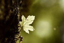 Green Autumn
