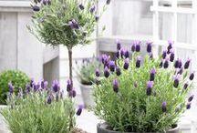 Plants, herbs and greenies