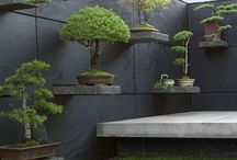 Cool Garden Ideas / Interesting ways to show off your outdoor space.