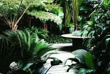 Tropical Gardens / Your escape amongst the trees.