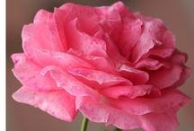 Loving Pink / by Jai Yen
