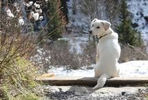 It's  A Dog's Life / I hope I can be the person my dog thinks I am.