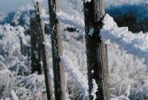 Fences & Posts