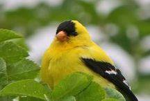 BIRDS II / by Sandy H