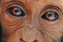 Tiere/ Animals / Wunderschöne Bilder und Zitate über Tiere.  Wonderful pictures and quotes about animals.
