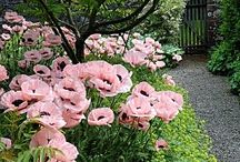 Garden / Planter hage park