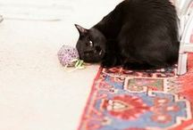 My Cat Products / Cat Toys, Kitty Toy, Cat Bed,
