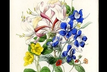 Wild Flowers of England / Fine hand-colored antique botanical prints from Reverend Robert Tyas' Wild Flowers of England, published in London in 1866.   Illustrated by renowned botanical artist James Andrews