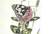 Butterfly - Бабочки