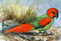 F.W. Frohawk / F.W.Frohawk was born in Norfolk, England and was one of the finest ornithological artists. When 20 he was appointed zoological artist to The Field, an important naturalist magazine in England. Frohawk was a talented and prolific artist, producing over 1000 illustrations.