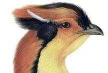 Ornithology books / http://commons.wikimedia.org/wiki/Category:Ornithology_books