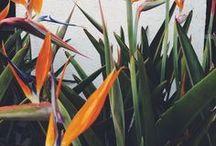 Floral Inspirations • Inspiration florale