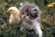 animals/Birds/...