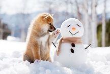 ❄️ Winter❄ / -Winter Wonderland-