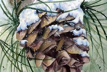 Christmas/Jesus is Reason for Season! / by Roseanna Barto