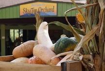 Skytop Orchard Visit