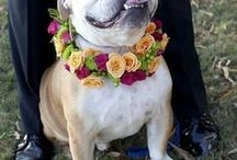 | Dogs at Weddings | / Cute and fun ways to incorporate your dog on your special day.