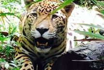 Wildlife Conservation / With such diverse flora and fauna, Belize is the perfect place to study wildlife conservation