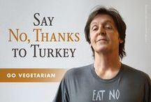 Vegan holidays