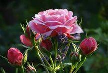 Flowers Ruth / Sou autêntica, inteligente e muito feliz... adoro conhecer o novo... ocupo muito bem o meu tempo com coisas saudáveis...Faço um pouco de cada coisa procuro manter -me  bem informada!!! gosto de ler, fazer artesanato, correr, caminhar...amoooo minha família e também as flores, enfim amo viver!!!