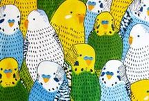 Best Budgerigards / Budgerigars, parakeets and more budgerigars.