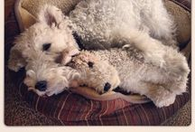 THE BEST FRIEND FOR SURE / Love Fox terrier