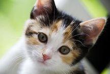 like my calico cat CALLY
