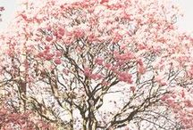 [ spring break ]