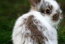 bunny wunny wabbits