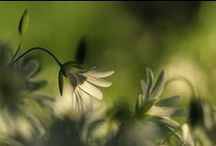 ~✿⊱╮ Shades of Green / by Belinda ~✿⊱╮