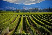Marlborough's Wine and Food